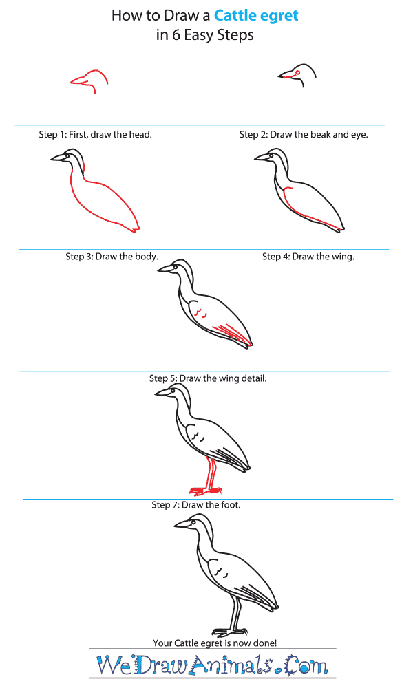 How To Draw A Cattle Egret