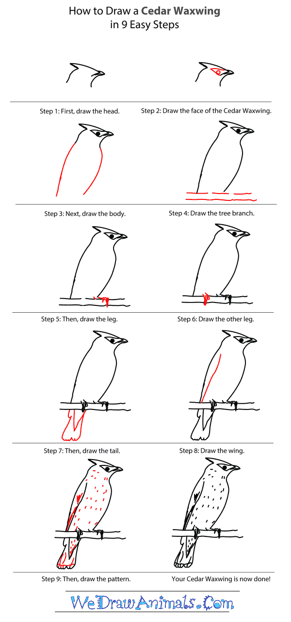 how to draw a trout step by step