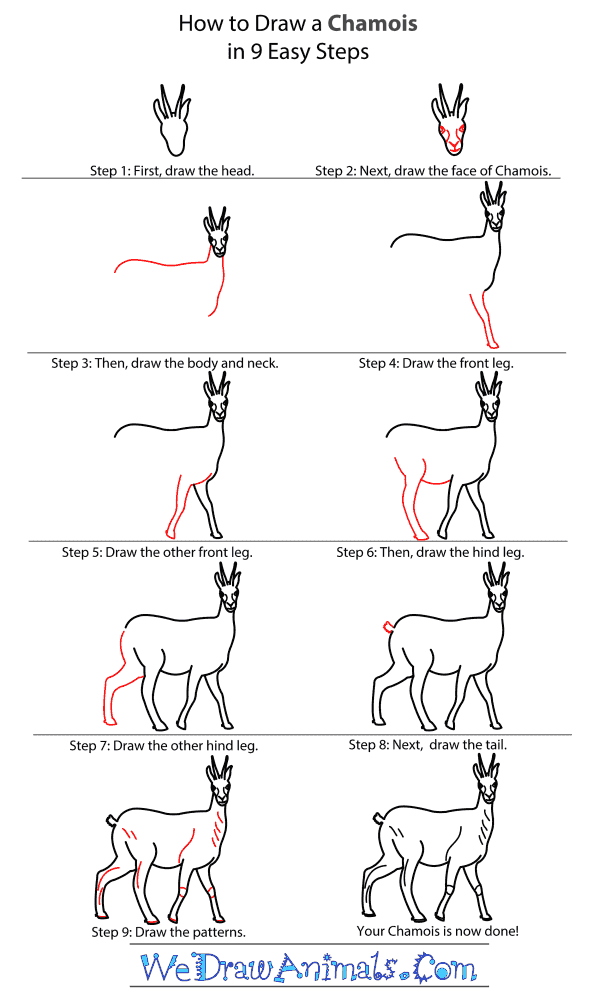 How to Draw a Chamois - Step-By-Step Tutorial