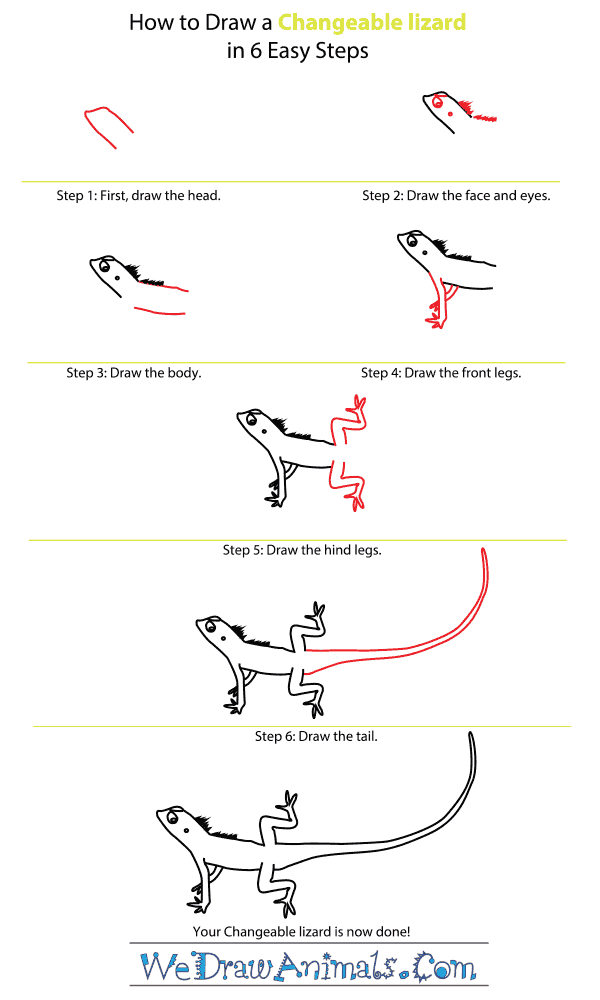 How to Draw a Changeable Lizard - Step-by-Step Tutorial