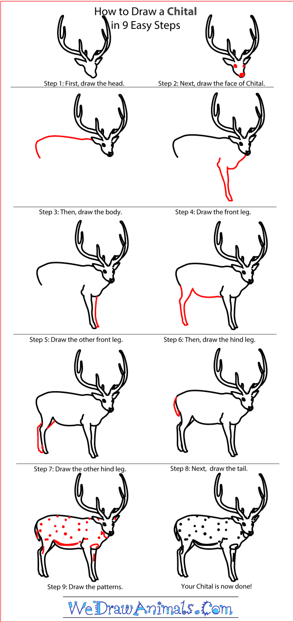 How to Draw a Chital - Step-by-Step Tutorial