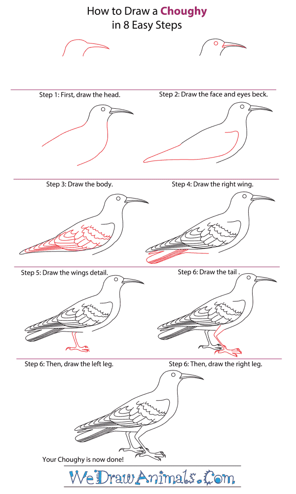 How to Draw a Chough - Step-by-Step Tutorial