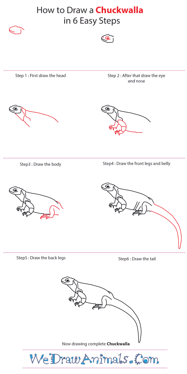 How to Draw a Chuckwalla - Step-by-Step Tutorial