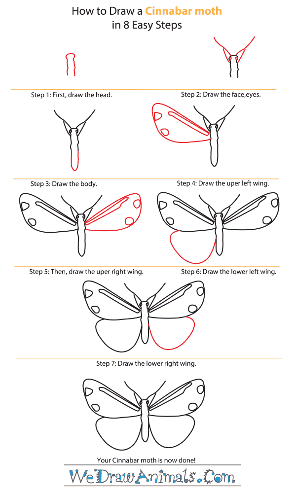 How to Draw a Cinnabar Moth - Step-by-Step Tutorial