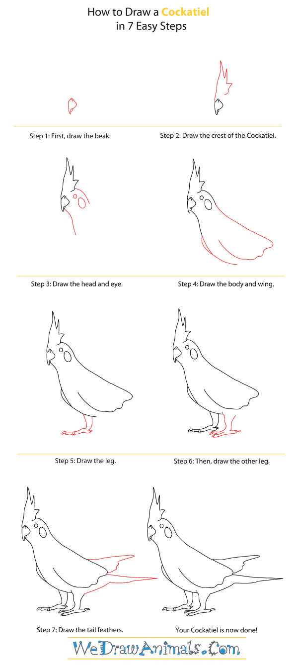 How to Draw a Cockatiel - Step-By-Step Tutorial