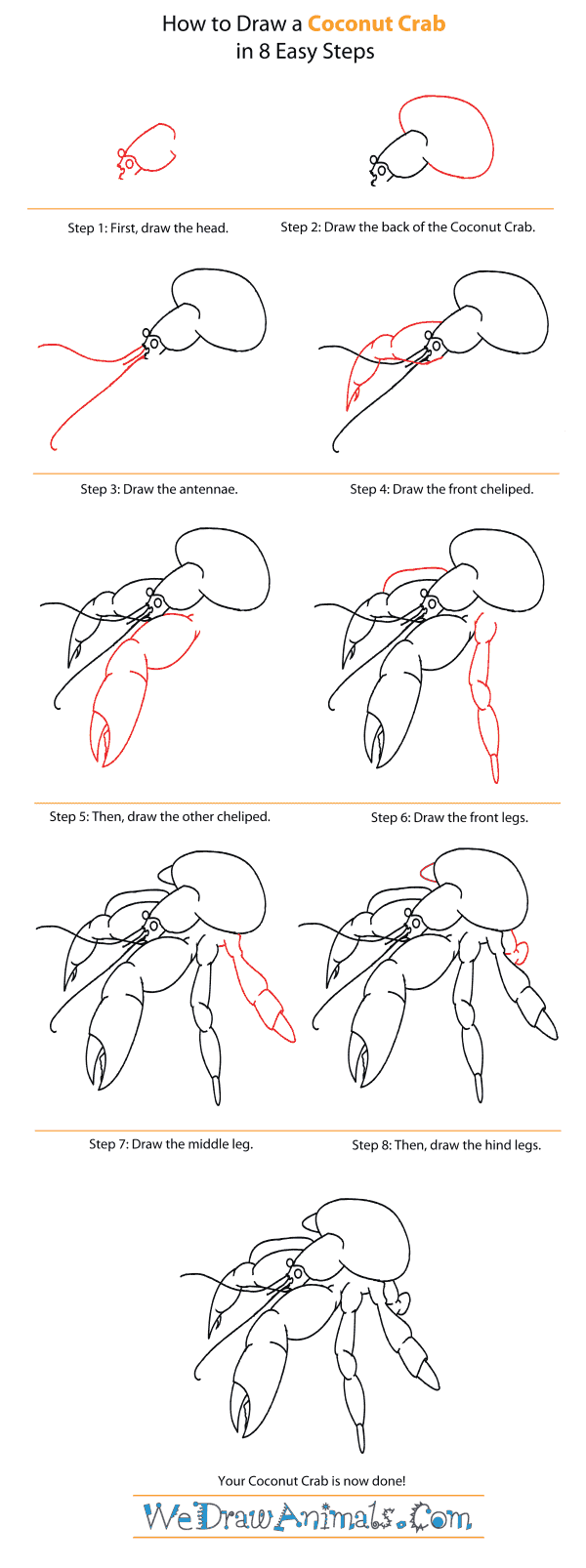 How To Draw A Coconut Crab  Stepbystep Tutorial
