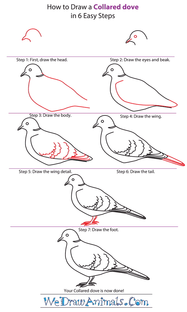 How to Draw a Collared Dove - Step-by-Step Tutorial