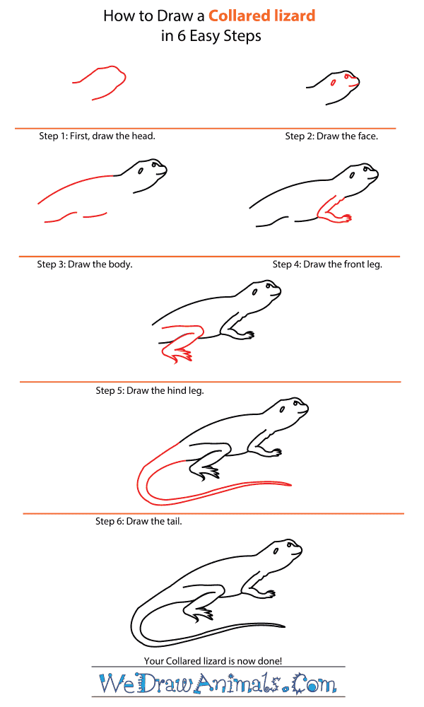 How to Draw a Collared Lizard - Step-by-Step Tutorial