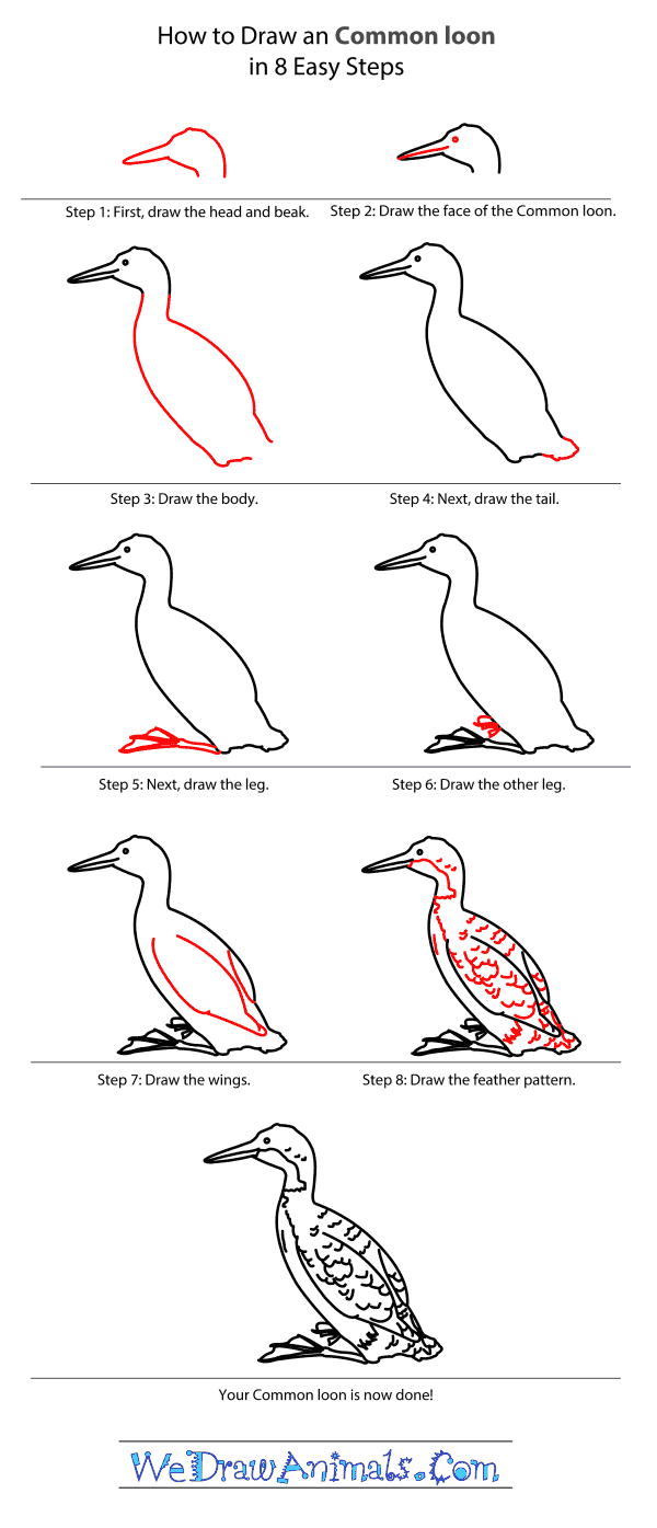 How to Draw a Common Loon - Step-by-Step Tutorial