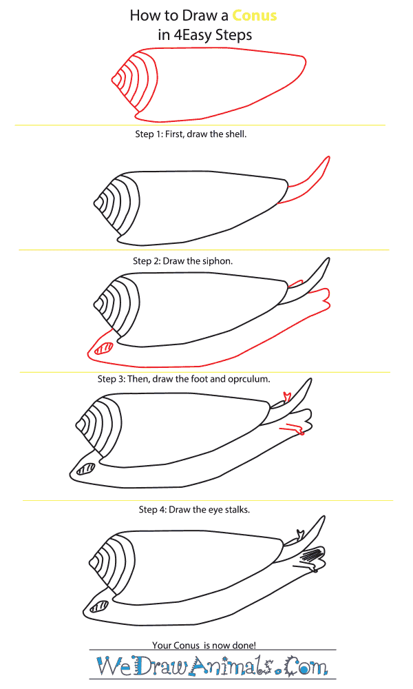 How to Draw a Conus - Step-By-Step Tutorial