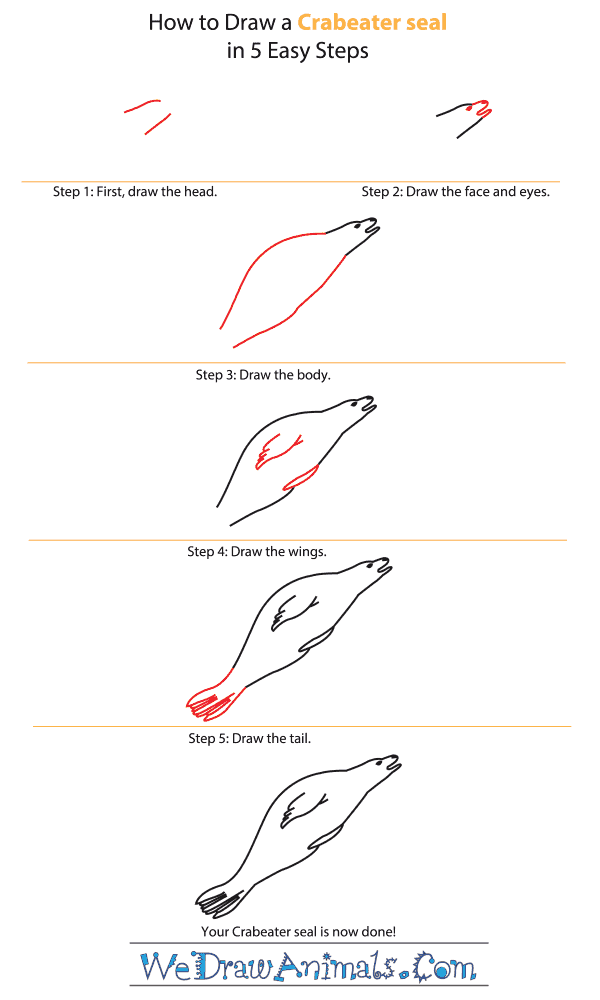 How to Draw a Crabeater Seal - Step-by-Step Tutorial
