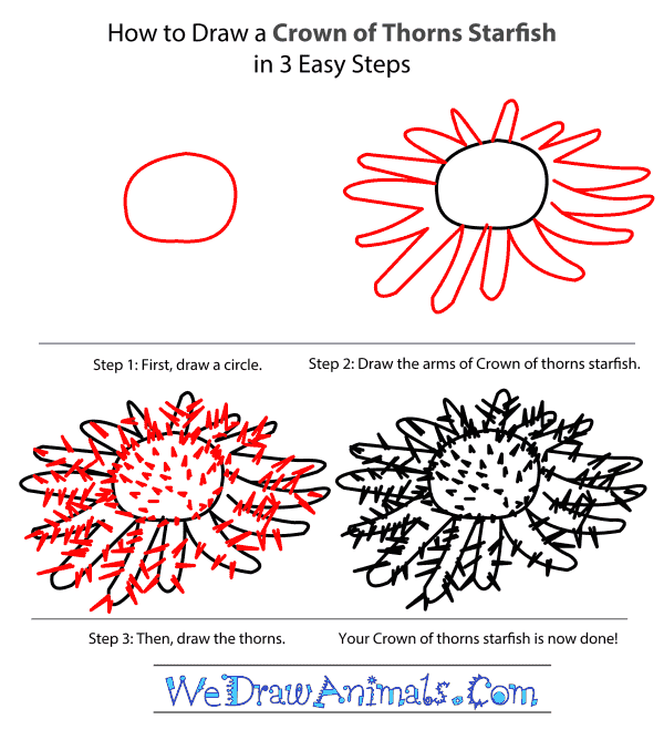 How to Draw a Crown Of Thorns Starfish - Step-by-Step Tutorial