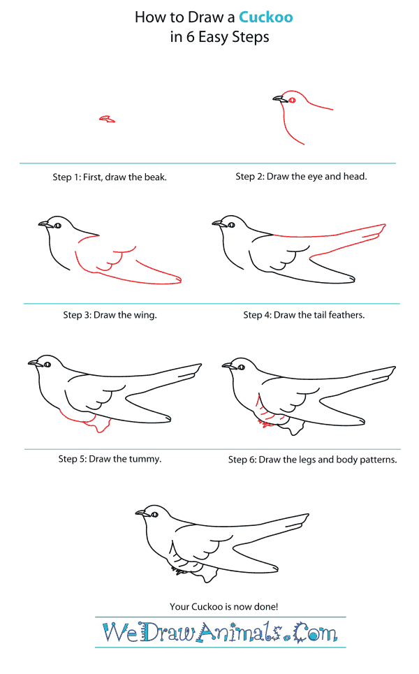 How to Draw a Cuckoo - Step-By-Step Tutorial