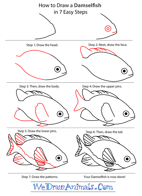 How to Draw a Damselfish - Step-by-Step Tutorial