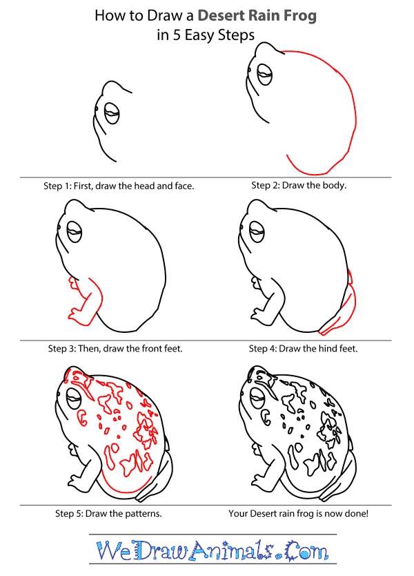 How to Draw a Desert Rain Frog - Step-By-Step Tutorial