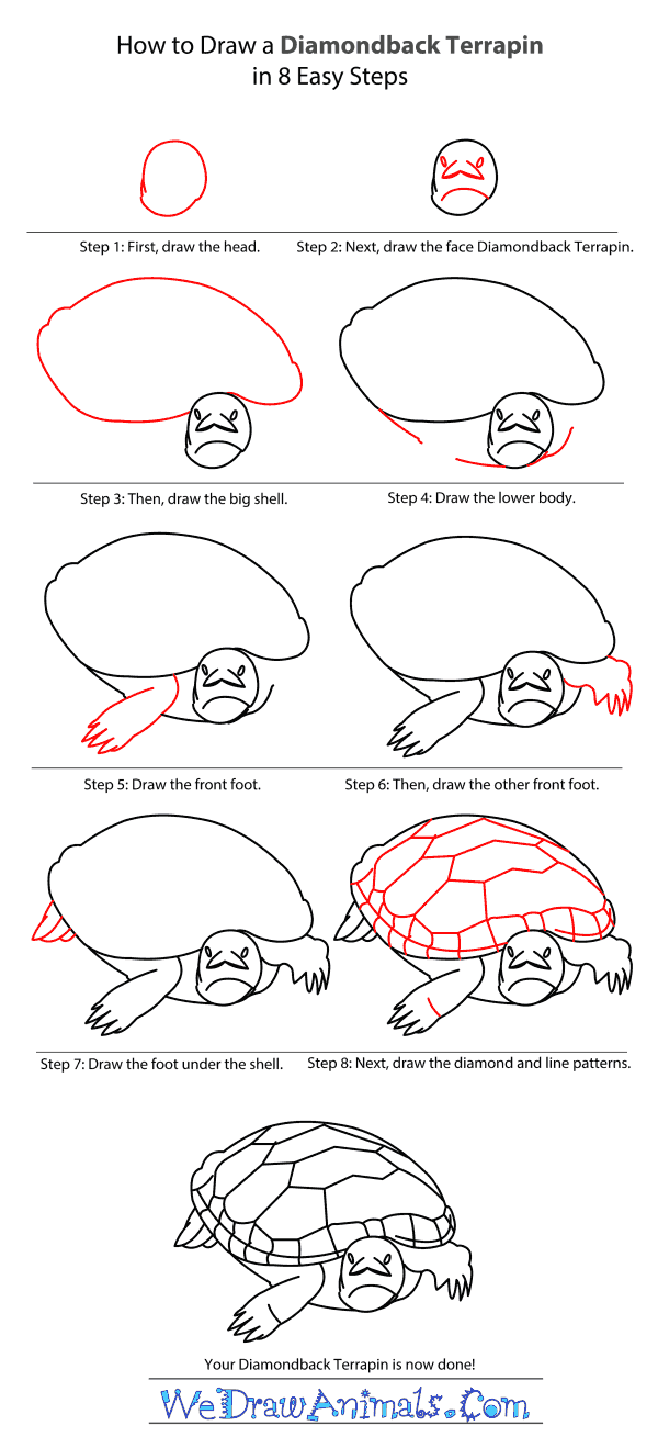 How to Draw a Diamondback Terrapin - Step-by-Step Tutorial