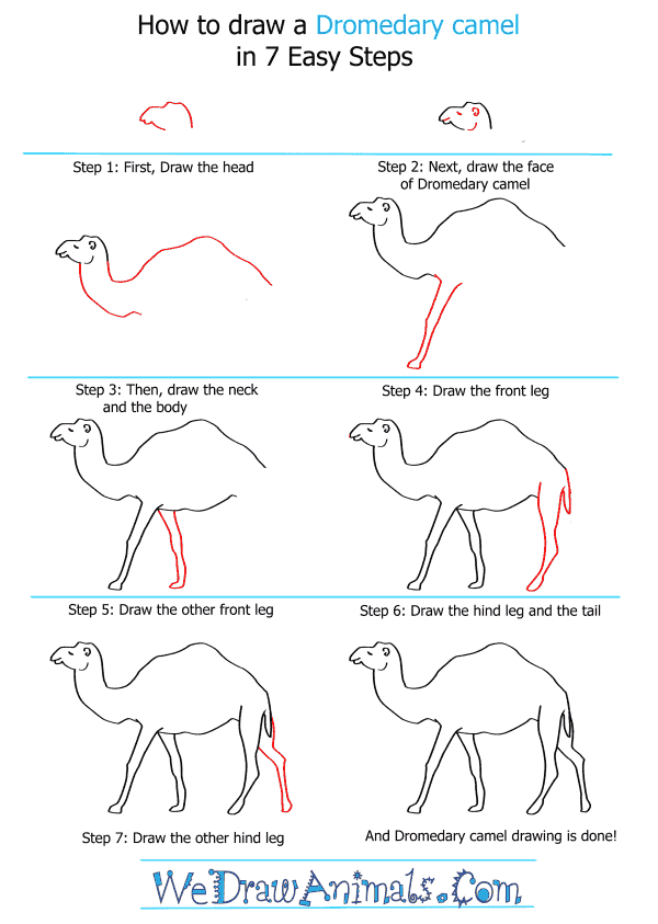 How to Draw a Dromedary Camel - Step-by-Step Tutorial