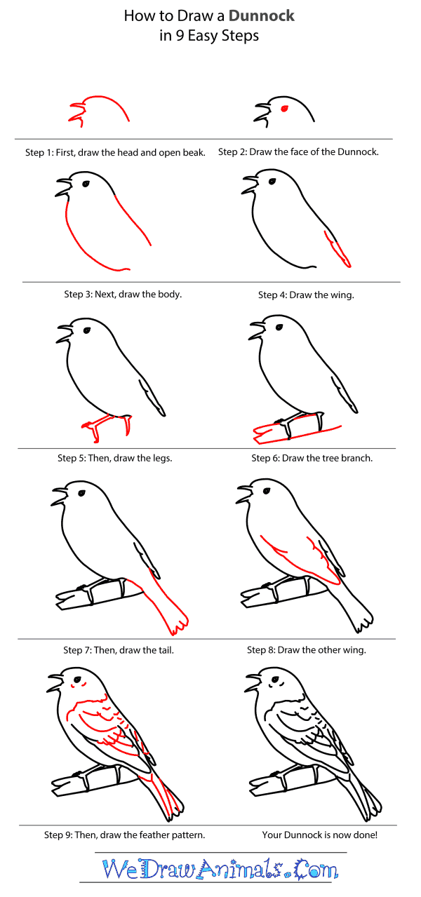 How to Draw a Dunnock - Step-by-Step Tutorial