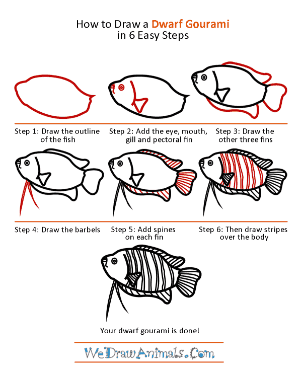 How to Draw a Dwarf Gourami - Step-by-Step Tutorial