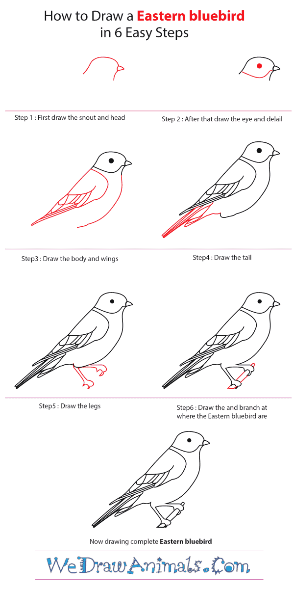how to draw an eastern bluebird step by step tutorial