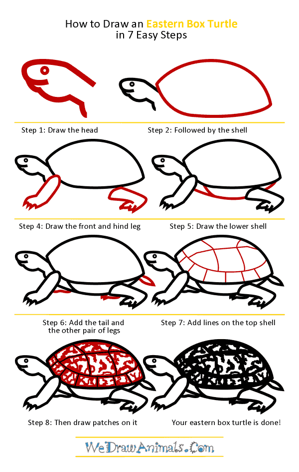 How to Draw an Eastern Box Turtle - Step-by-Step Tutorial