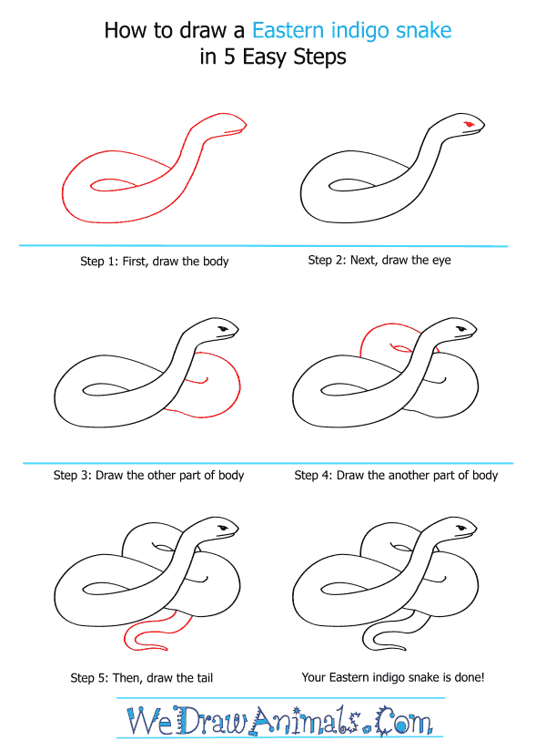 How to Draw an Eastern Indigo Snake - Step-by-Step Tutorial