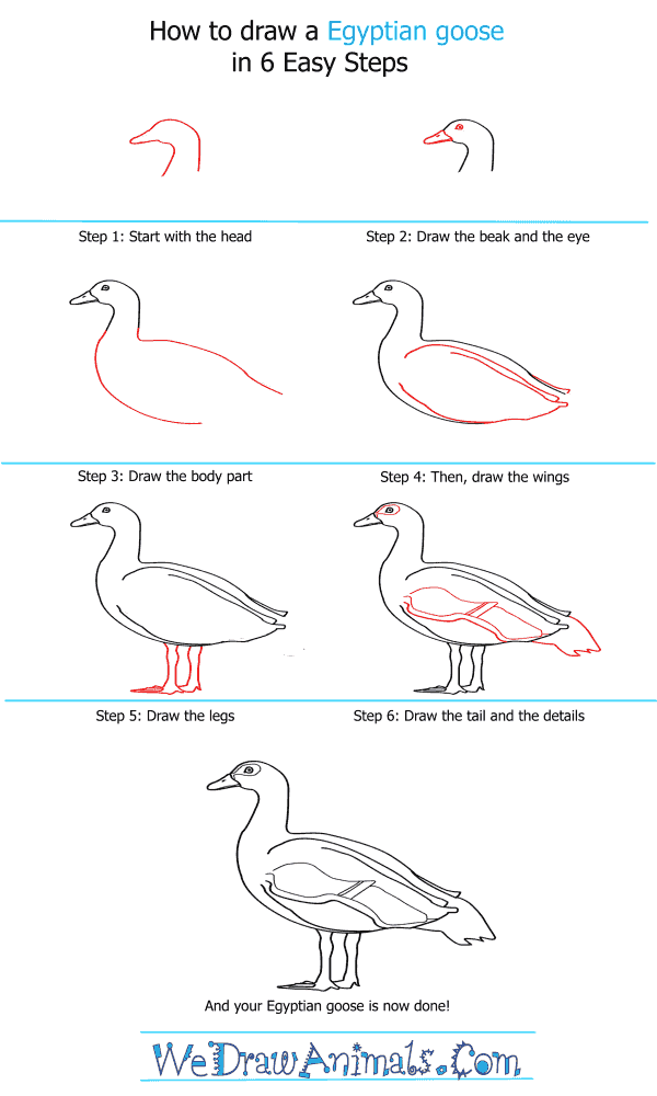 how to draw an egyptian goose step by step tutorial