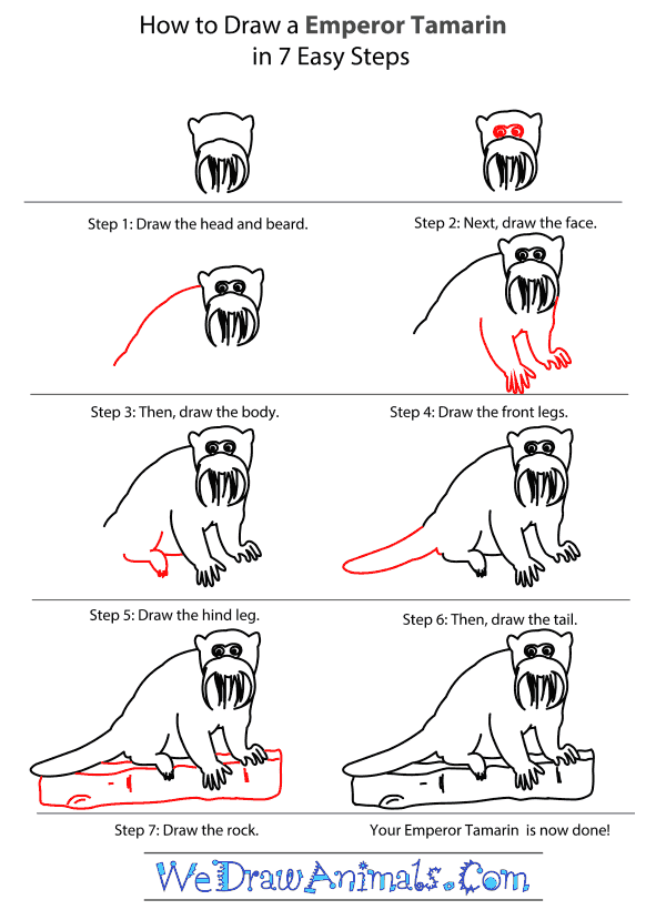 How to Draw an Emperor Tamarin - Step-by-Step Tutorial