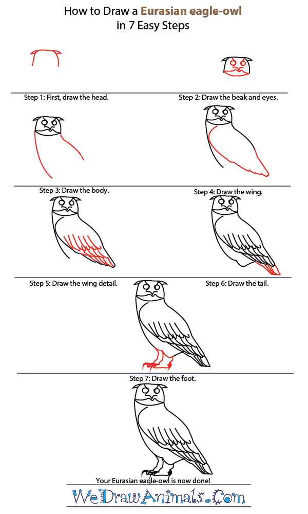 How to Draw a Eurasian Eagle-Owl - Step-by-Step Tutorial