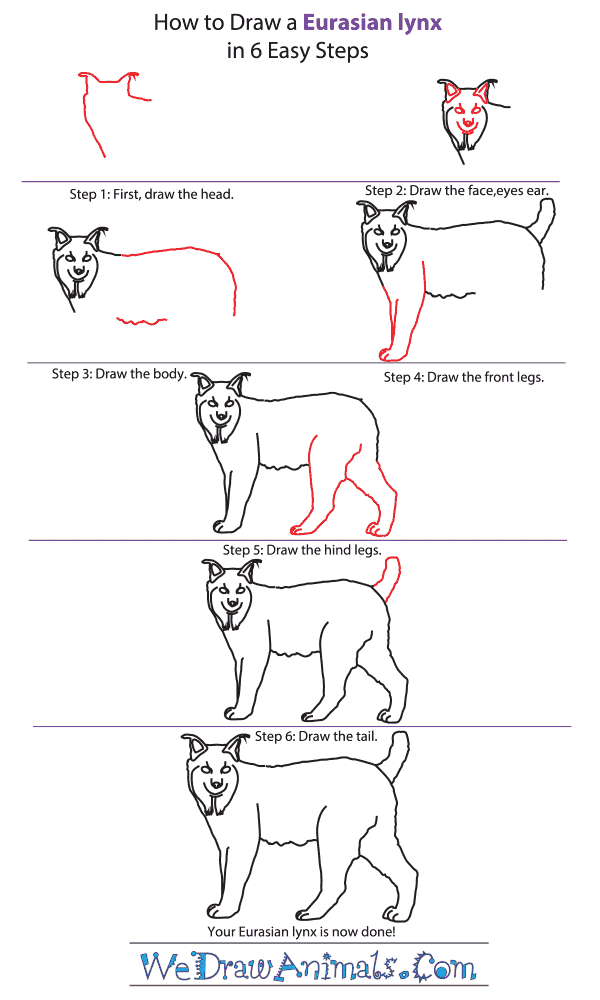 How to Draw a Eurasian Lynx - Step-by-Step Tutorial