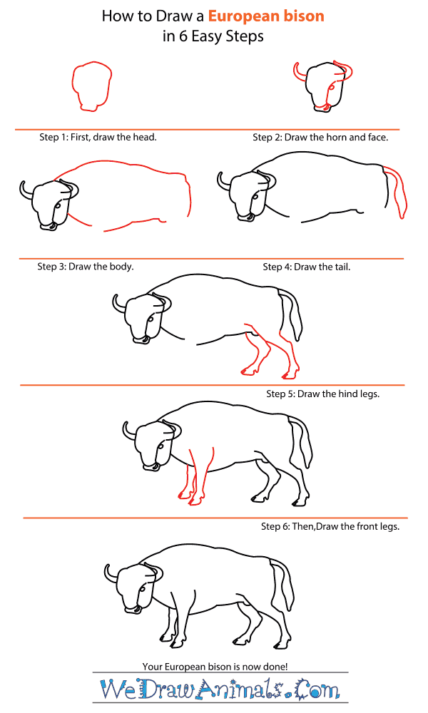 How to Draw a European Bison - Step-by-Step Tutorial
