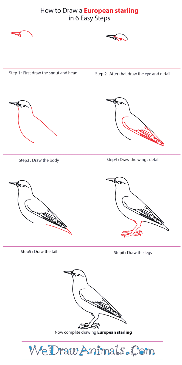 How to Draw a European Starling - Step-by-Step Tutorial