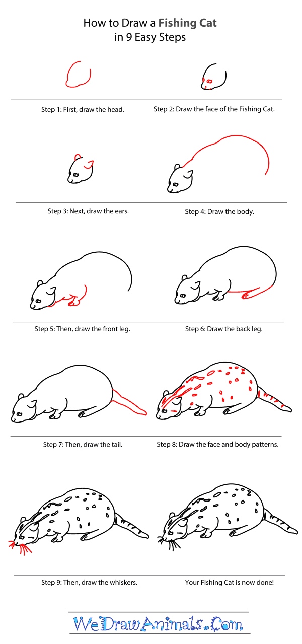 How to Draw a Fishing Cat - Step-by-Step Tutorial