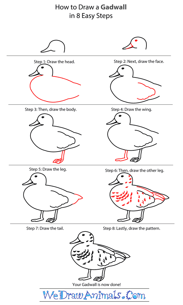 How to Draw a Gadwall - Step-by-Step Tutorial