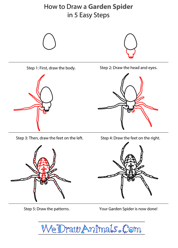 How to Draw a Garden Spider - Step-By-Step Tutorial