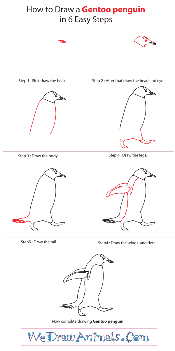 How to Draw a Gentoo Penguin - Step-by-Step Tutorial
