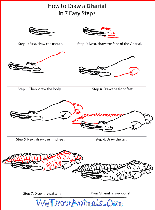 How to Draw a Gharial - Step-by-Step Tutorial
