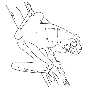 How To Draw a Glass Frog - Step-By-Step Tutorial