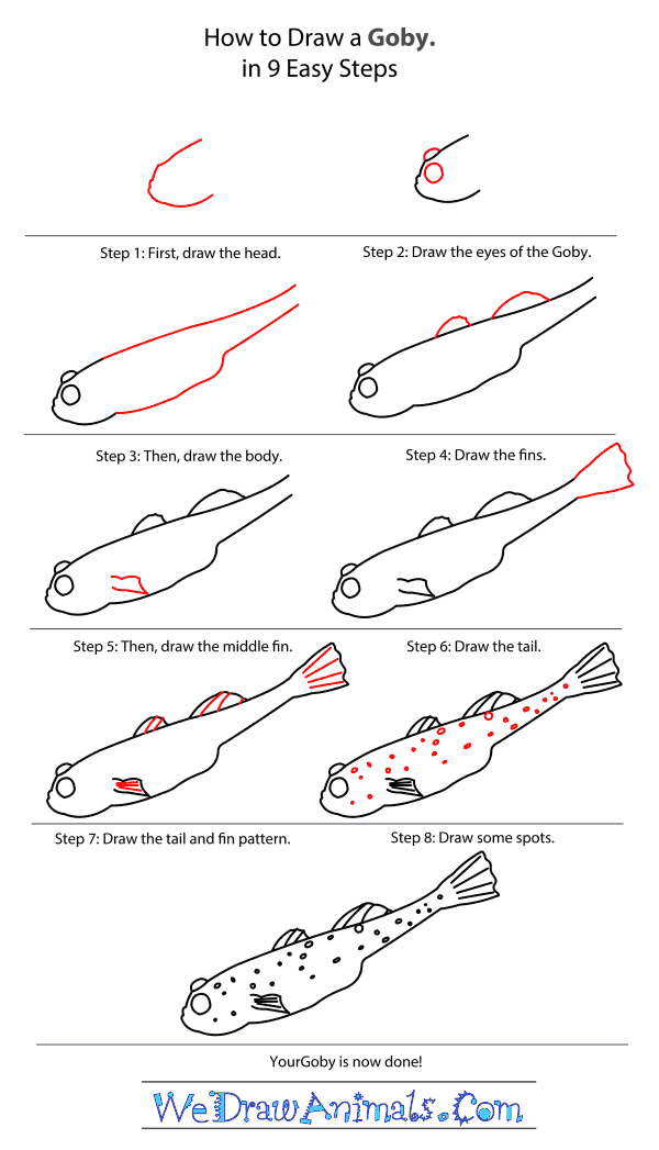 How to Draw a Goby - Step-by-Step Tutorial