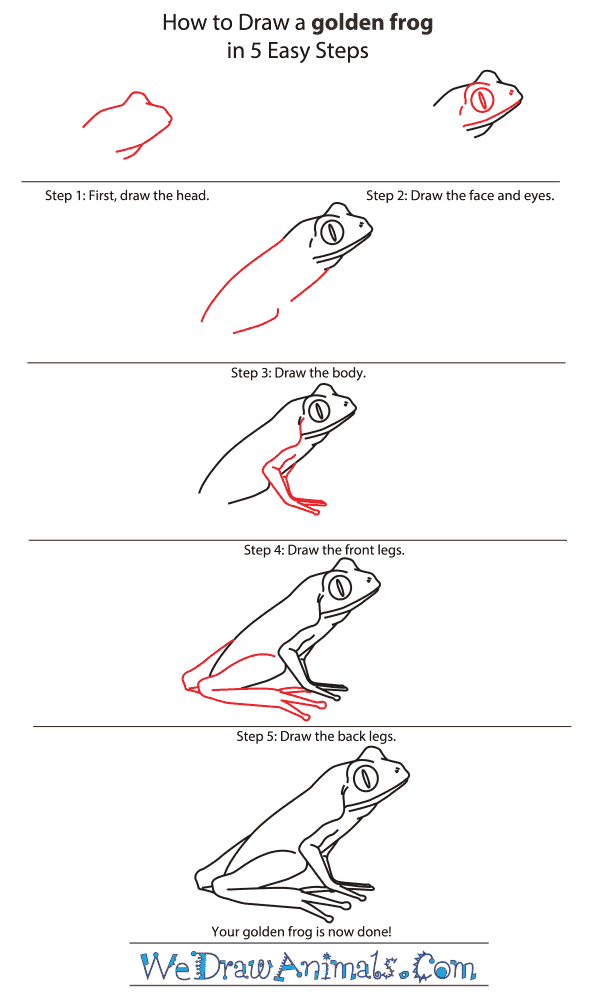 How to Draw a Golden Frog - Step-by-Step Tutorial