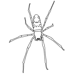 How To Draw a Golden Orb Spider - Step-By-Step Tutorial