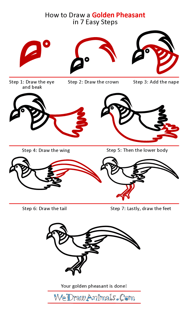 How to Draw a Golden Pheasant - Step-by-Step Tutorial