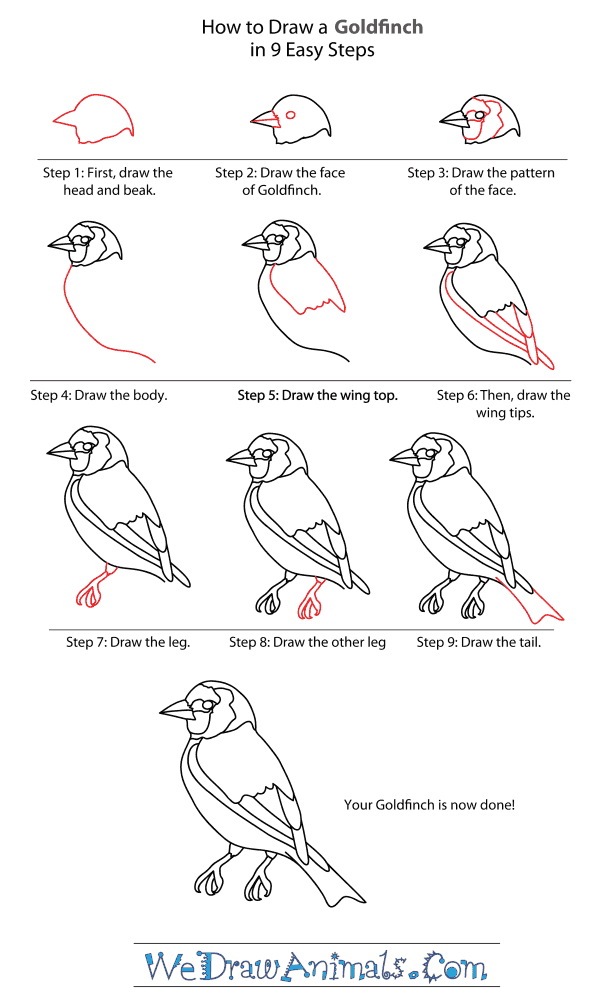 How to Draw a Goldfinch - Step-By-Step Tutorial