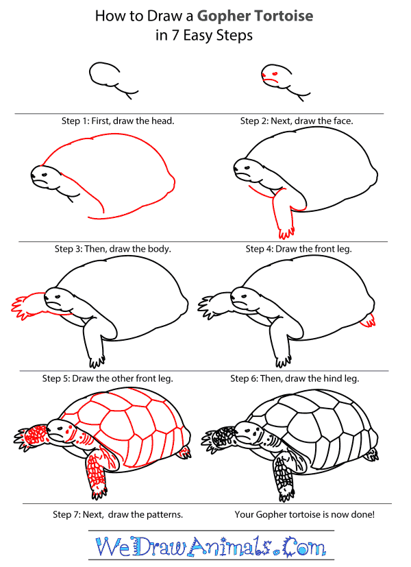 How to Draw a Gopher Tortoise - Step-by-Step Tutorial