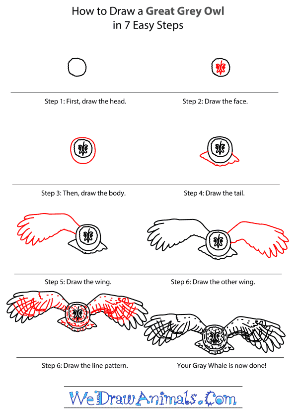 How to Draw a Great Grey Owl - Step-by-Step Tutorial