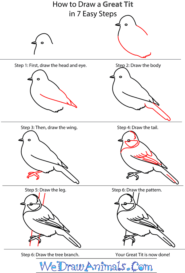How to Draw a Great Tit - Step-by-Step Tutorial