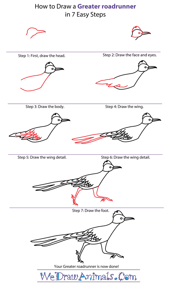 How to Draw a Greater Roadrunner - Step-by-Step Tutorial