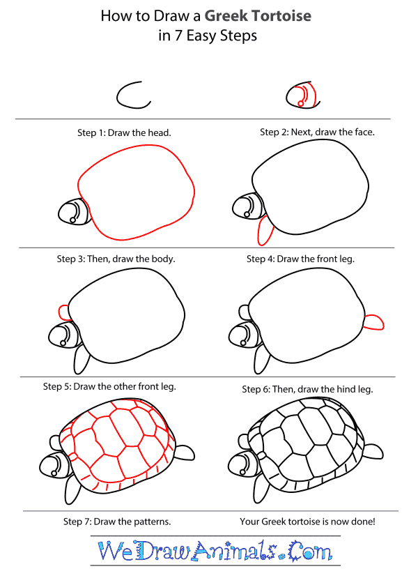 How to Draw a Greek Tortoise - Step-by-Step Tutorial