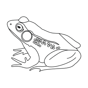 How To Draw a Green Frog - Step-By-Step Tutorial