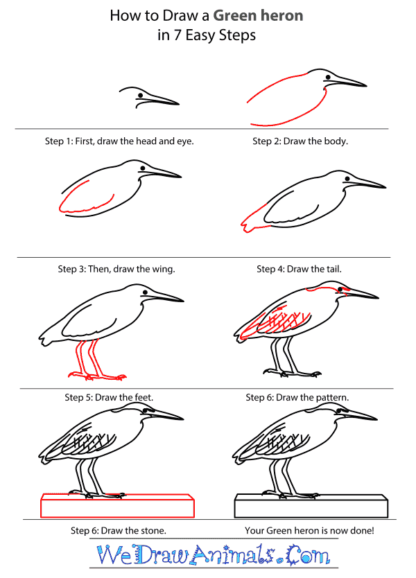 How to Draw a Green Heron - Step-by-Step Tutorial